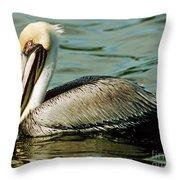 Brown Pelican Swimming Throw Pillow