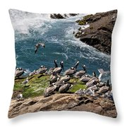 Brown Pelicans And Gulls On The Reef Throw Pillow