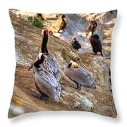 Brown Pelicans At Rest Throw Pillow