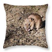 Brown Rat Throw Pillow