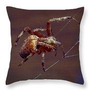 Brown Spider Throw Pillow