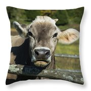 Brown Swiss Cow Throw Pillow