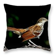 Brown Thrasher On Limb Throw Pillow