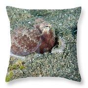 Brownstripe Octopus Burying Itself Throw Pillow