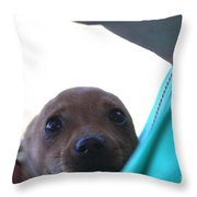 Brutus The II In Love Throw Pillow
