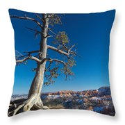 Bryce Tree Throw Pillow