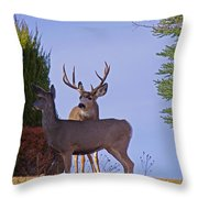 Buck And Doe In Yard Throw Pillow
