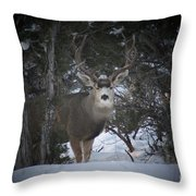 Buck I Throw Pillow