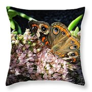 Buckeye Butterfly On Sedum Throw Pillow