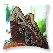 Buckeye Butterfly Throw Pillow