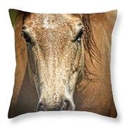 Buckskin Stallion Throw Pillow