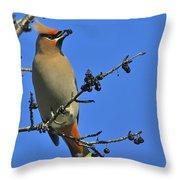 Buckthorn Breakfast Throw Pillow
