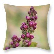 Budding Lilac 4 Throw Pillow