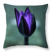 Budding Water Lily Throw Pillow