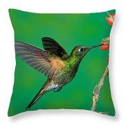 Buff-tailed Coronet Throw Pillow