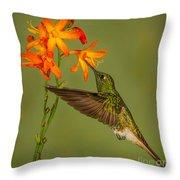 Buff-tailed Coronet Hummingbird No 1 Throw Pillow