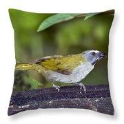 Buff-throated Saltator Throw Pillow