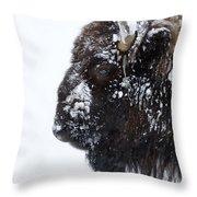 Buffalo   #0164 Throw Pillow