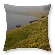 Buffalo   #0237 Throw Pillow