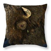 Buffalo   #5601 Throw Pillow