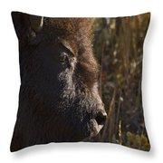 Buffalo   #9242 Throw Pillow