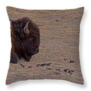 Buffalo And Birds   #2236 Throw Pillow