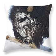 Buffalo Eating   #9634 Throw Pillow