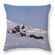 Buffalo Herd In Snow   #6075 Throw Pillow