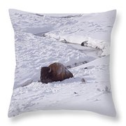 Buffalo In Snow   #6872 Throw Pillow