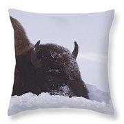 Buffalo In Snow   #6920 Throw Pillow