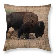 Buffalo Of Antelope Island Iv Throw Pillow