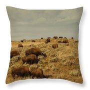 Buffalo On The Prairie Throw Pillow