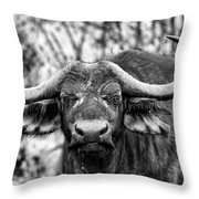 Buffalo Stare In Black And White Throw Pillow