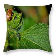 Bug On Leaf Throw Pillow