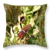Bug On Stalk Of The Wooly Mullein Throw Pillow