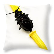 Bug On The Cob Throw Pillow by Amy Cicconi