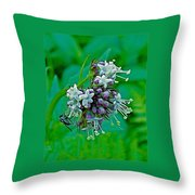 Bug On Wild Mint On Great Glacier Trail In Glacier National Park-british Columbia  Throw Pillow
