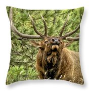 Bugling Bull Elk II Throw Pillow by Ron White