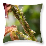 Bugs Are Hungry Throw Pillow