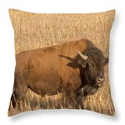 Bull Bison At The  Elk Ranch Grand Teton National Park Throw Pillow
