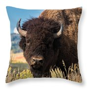 Bull Bison Throw Pillow