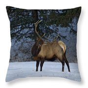 Bull Elk   #9923 Throw Pillow