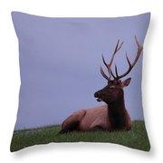 Bull Elk At Dusk Throw Pillow