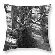 Bull Elk Bw Throw Pillow