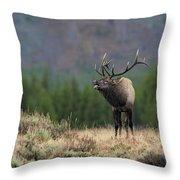 Bull Elk Calling Throw Pillow by Daniel Behm