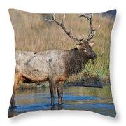 Bull Elk Crossing River Throw Pillow