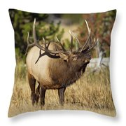 Bull Elk II Throw Pillow