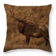 Bull Elk In Evening Light Throw Pillow