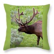 Bull Elk In Yellowstone Throw Pillow