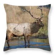 Bull Elk On The Madison River Throw Pillow